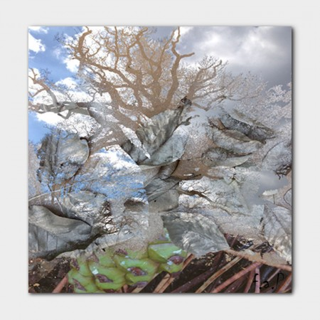 Canvasdoek-100-x-100-cm.-Tree-achtergrond